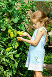 Meisje die haar moeder met tomaat in de tuin helpen Royalty-vrije Stock Afbeeldingen