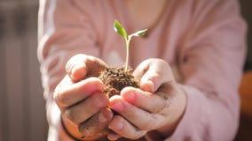 Meisje die jonge groene installatie in handen houden Concept en symbool van groei, zorg, die de aarde, ecologie de beschermen stock videobeelden