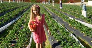 Meisje die met emmer van aardbei in het landbouwbedrijf 4k lopen stock footage