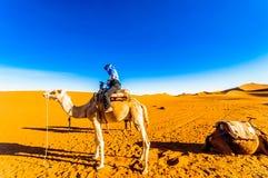 Meisje die op kameel kameeltrek in de woestijn van Marokko doen naast stock fotografie