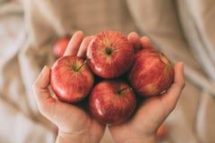 Meisje die rode verse appelen in hand houden Organisch en gezond fruit Sluit omhoog mening van rode appelen royalty-vrije stock afbeelding