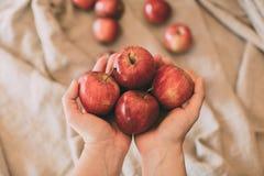 Meisje die rode verse appelen in hand houden Organisch en gezond fruit Sluit omhoog mening van rode appelen royalty-vrije stock foto