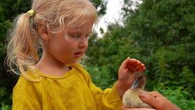 Meisje die zacht een klein eendje op het hoofd strijken stock video