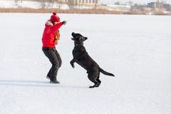 Meisje die zwart Labrador opleiden bij de winterpark stock afbeeldingen
