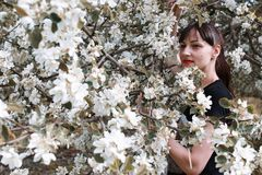 Meisje in een de bloesemboom van de de zomer zonnige dag Stock Afbeelding
