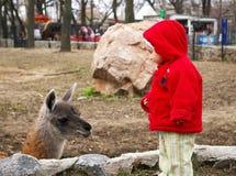 Meisje in een dierentuin en lama Stock Afbeelding