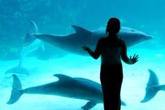 Meisje en de dolfijnen Stock Fotografie
