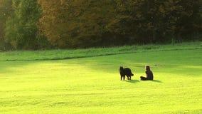 Meisje en een Hond in het Park stock video