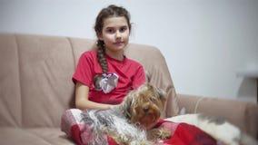 Meisje en een hond het meisje zit op de laag lettend op TV, binnen ligt de hond op de levensstijl van de overlappingsavond stock videobeelden