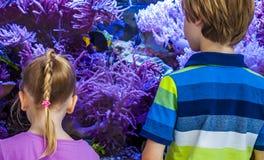 Meisje en jongens het letten op vissen en koralen in het aquarium stock fotografie