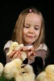 Meisje en kleine kippen 1 Stock Foto's