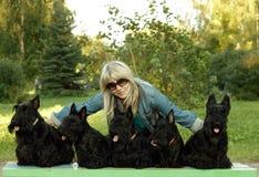 Meisje en Schotse terriers Royalty-vrije Stock Afbeeldingen