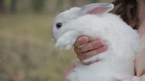 Meisje en wit konijn stock footage
