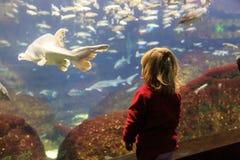 Meisje het letten op vissen in een groot aquarium Stock Afbeelding