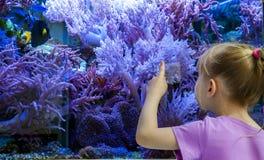 Meisje het letten op vissen en koralen in het aquarium royalty-vrije stock foto