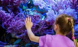 Meisje het letten op vissen en koralen in het aquarium stock foto's