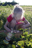 Meisje het plukken aardbeien Stock Foto's