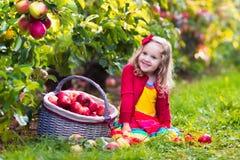 Meisje het plukken appelen van boom in een fruitboomgaard Stock Afbeeldingen