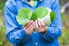 Meisje het plukken coltsfoot bladeren voor het drogen Royalty-vrije Stock Fotografie