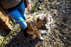Meisje het spelen met Kaukasische herdershond, de herfst stock fotografie
