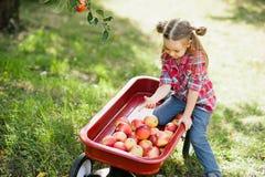 Meisje met Apple in de Apple-Boomgaard Royalty-vrije Stock Fotografie