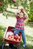 Meisje met Apple in de Apple-Boomgaard Royalty-vrije Stock Afbeeldingen
