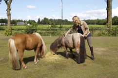 Meisje met de poneys van Shetland Royalty-vrije Stock Afbeelding