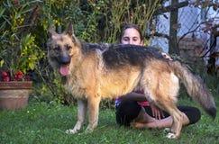 Meisje met een Duitse herder Stock Foto
