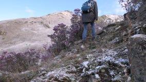 Meisje met een hond in de bergen stock video