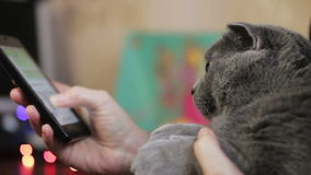 Meisje met een kat stock footage