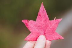Meisje met een rood blad in haar hand stock afbeeldingen