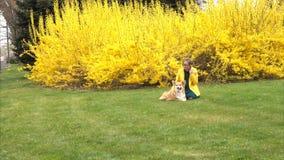 Meisje met hond op een gazon stock videobeelden