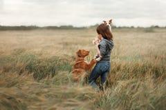 Meisje met honden op het gebied royalty-vrije stock fotografie