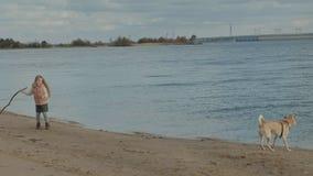 Meisje met krullend haar in warme kleren, die met een bruine hond op het strand, een hond spelen die een stok uit trekken rond lo stock video