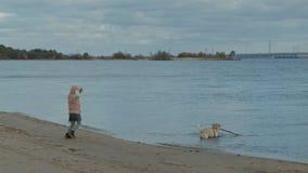Meisje met krullend haar in warme kleren, die met een bruine hond op het strand, een hond spelen die een stok uit trekken rond lo stock videobeelden
