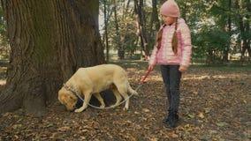 Meisje met Labrador stock video
