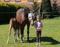 Meisje met paarden Royalty-vrije Stock Afbeeldingen