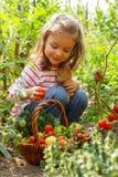 Meisje met plantaardige mand Stock Afbeeldingen
