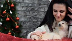Meisje met twee puppy in de Nieuwjaarsfeer stock video