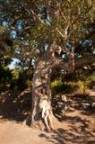 Meisje onder cork boom Royalty-vrije Stock Afbeeldingen
