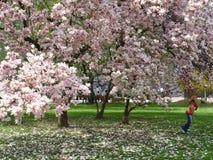 Meisje onder magnoliaboom Stock Afbeelding