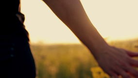 Meisje op een bloemgebied bij zonsondergang stock videobeelden