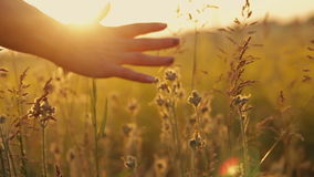 Meisje op een bloemgebied bij zonsondergang stock video