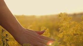 Meisje op een bloemgebied bij zonsondergang stock footage