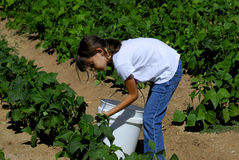 Meisje op het Landbouwbedrijf Royalty-vrije Stock Afbeeldingen