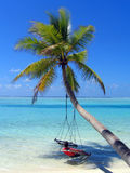 Meisje op palmgeschommel Royalty-vrije Stock Afbeelding