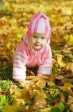 Meisje tegen de herfstaard stock fotografie