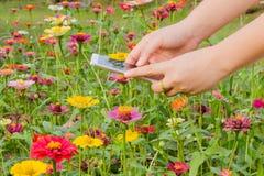 Meisjes captur bloemen door smartPhone Stock Foto's