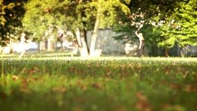 Meisjes die badminton in het de zomerpark spelen stock video