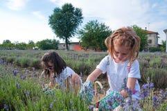 Meisjes die lavendel plukken Stock Fotografie